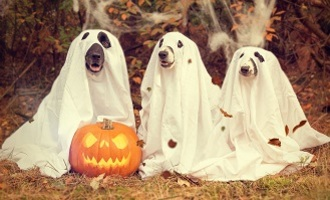 Image of Halloween